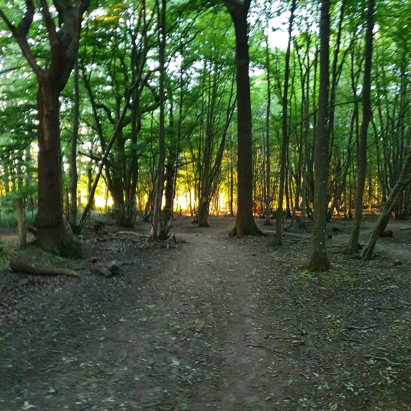 The woods in Wivelsfield