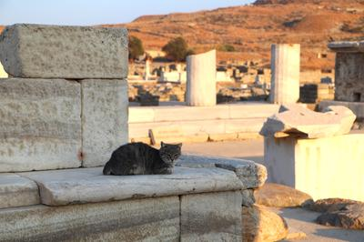Cat at the ruins on Delos island, UNESCO world heritage-listed site in the Greek Islands