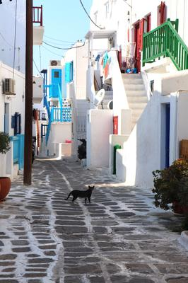 Cat in the streets of old town Chora, Mykonos Greece, Cyclades Islands