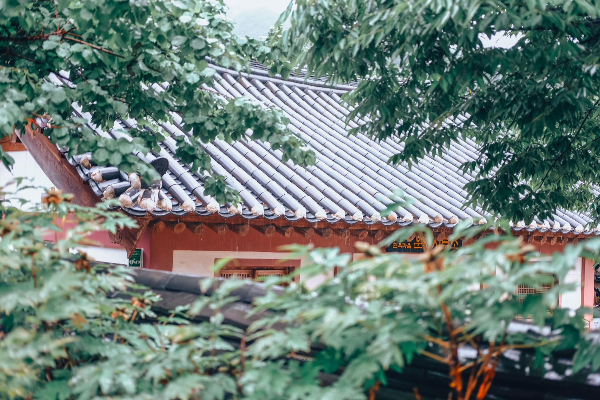 Japan Travel Writer | Jessica Esa
