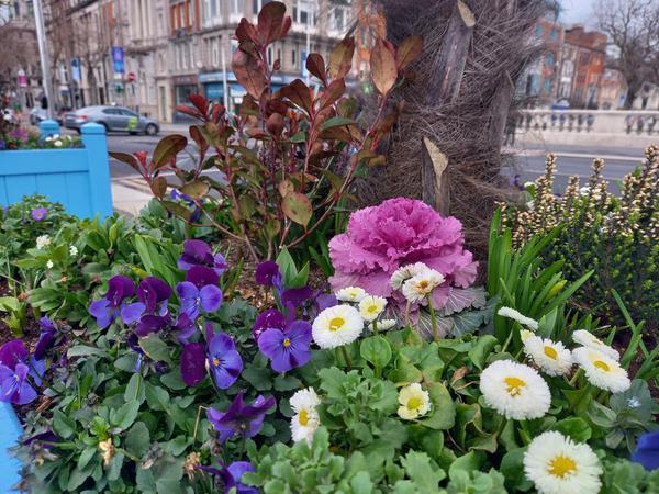 Flower box on O'Connell Bridge, Dublin